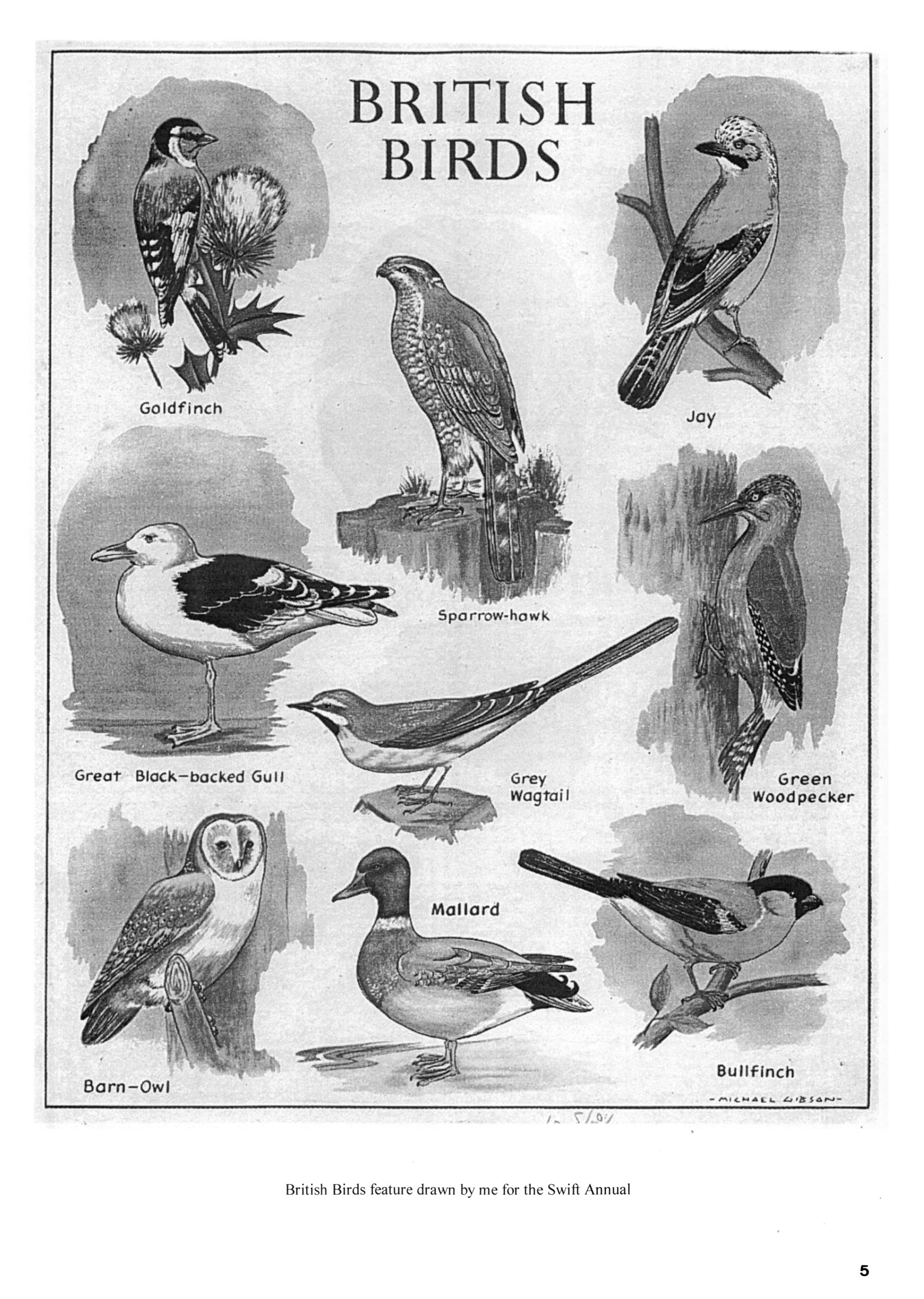 Eagle art editor page 3: British Birds illustration