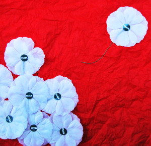 White peace poppies on red background. Photo by Judy Greenway
